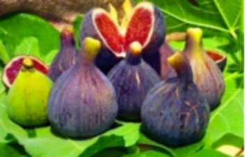 Adriatic figs from mediterranean