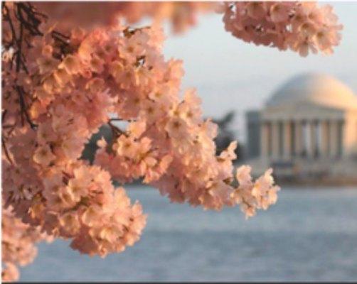 Smithsonian Magazine's Blooming Flowers