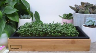microgreens seed quilt