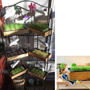 grow super greens with Hamama