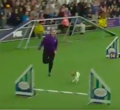 Westminster Dog Show's Gabby