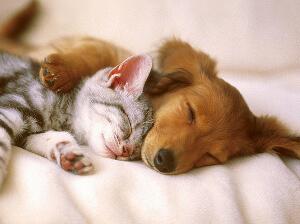 Public Liability Insurance for Pet Sitters