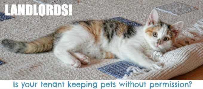Tenant Keeping Pets