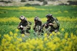 le plateau du Golan au printemps