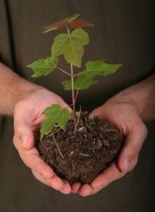 plantation-arbre-kkl