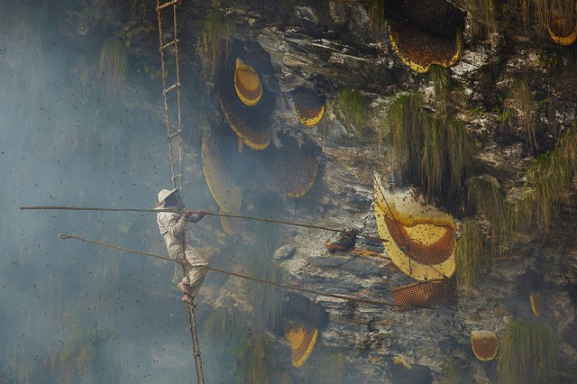 Giant Honey Bees Swarms In Nepal