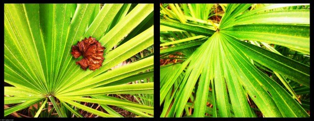 Palmettos by Ashlee Craft // ashleecraft.com