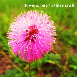 Flowers, One by Ashlee Craft - Cover