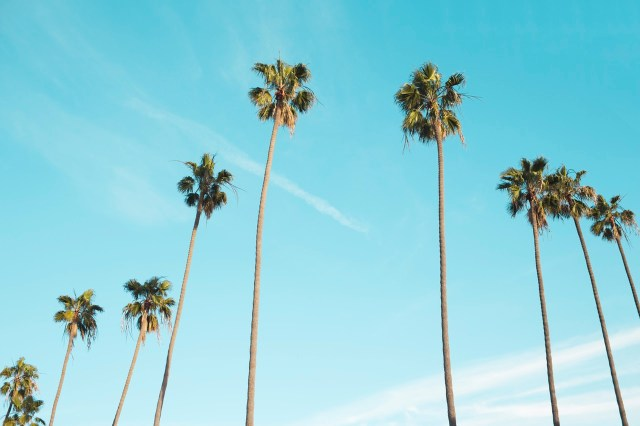 Palm trees under the sky