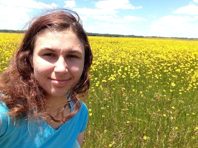 Myakka State Park - Yellow Flower Meadow - My Awesome Florida Road Trip