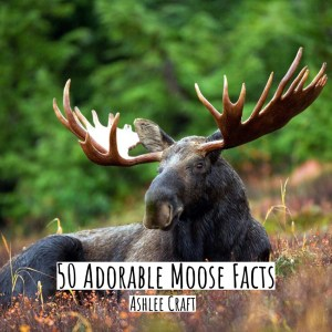 50 Adorable Moose Facts by Ashlee Craft