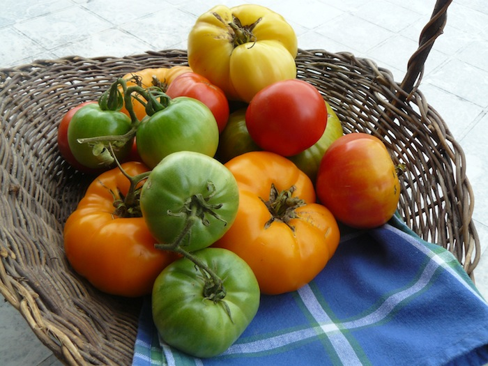 Tomatoes in a basket small