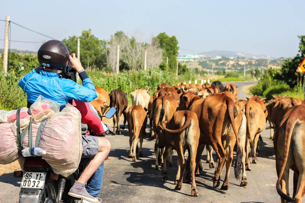 Motorcycling Across Vietnam: Part 2