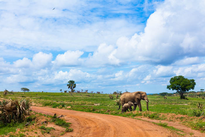 Safari in Uganda at Murchison Falls National Park