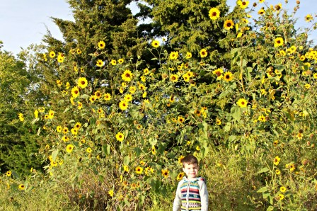 Toddler Picking Wild Sunflowers | {My Life Space Moments}