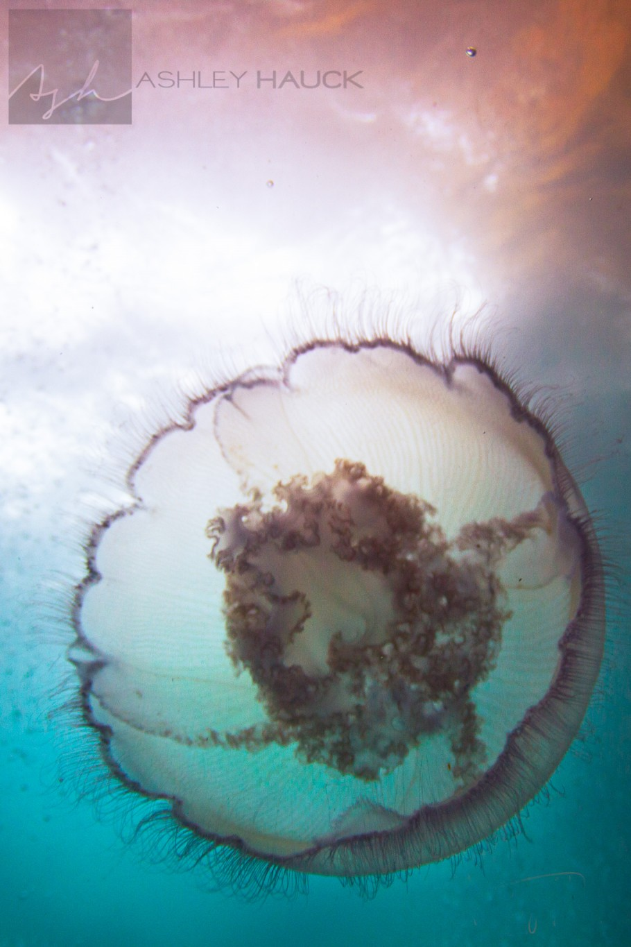 Jellyfish on Eureka oil rig