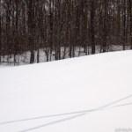Snowboard tracks on Killington golf course