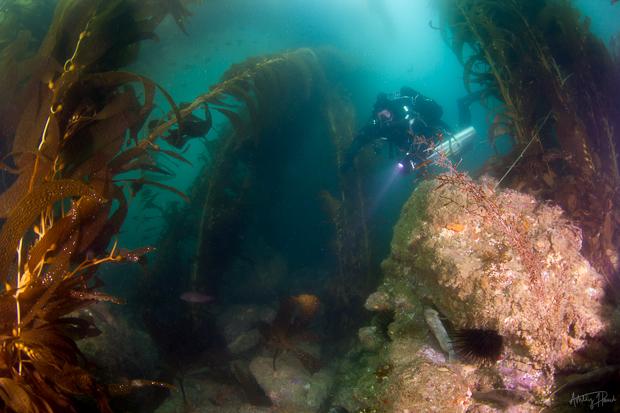 catalina chamber day-kelp-diver