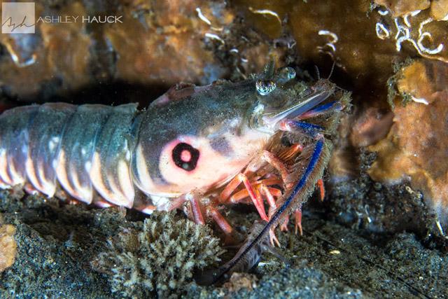 target-shrimp-la-jolla-shores