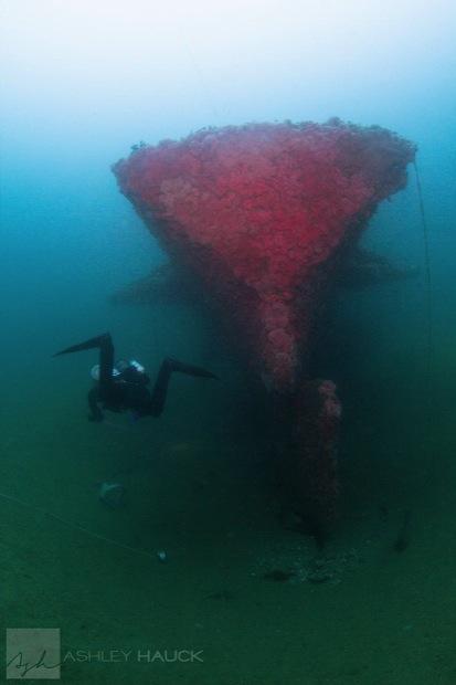 USS_Hogan_Wreck_16