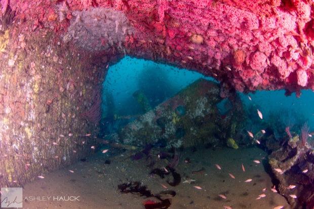 USS_Hogan_Wreck_22