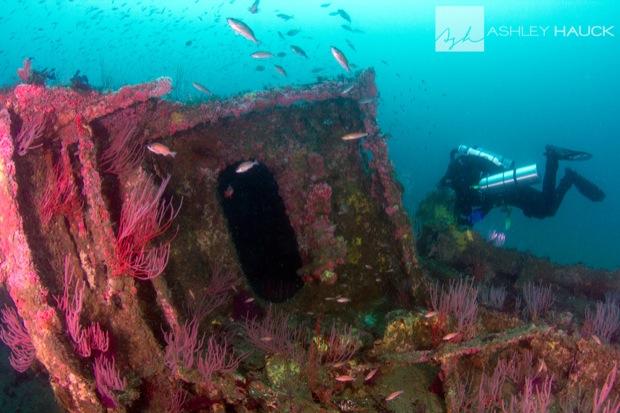 USS_Hogan_Wreck_25