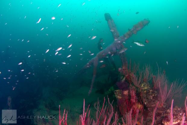 USS_Hogan_Wreck_28