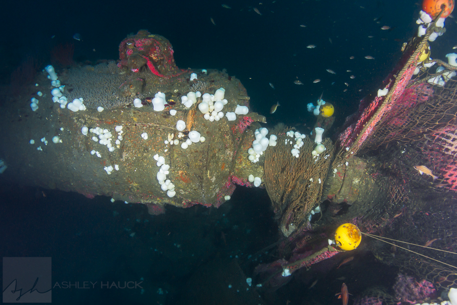 Stern of UB-88 submarine wreck.