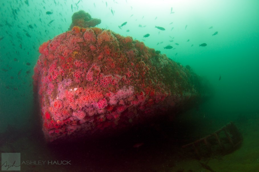 San Diego, California: Stern of the El Rey Wreck