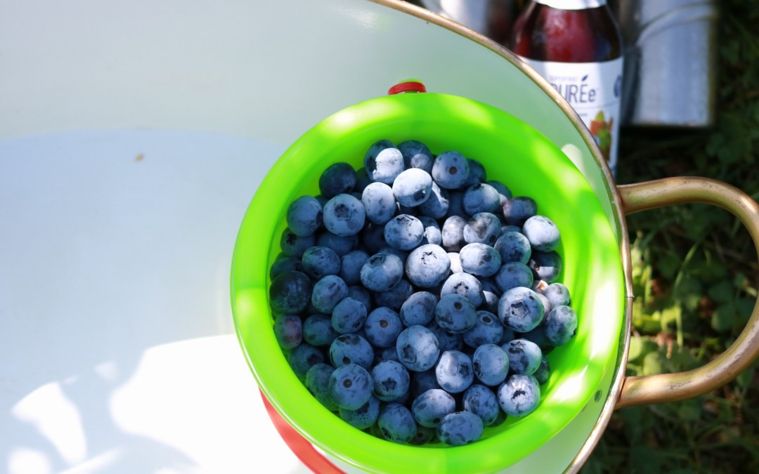The Health Benefits of Blueberries (It's Blueberry Month!)