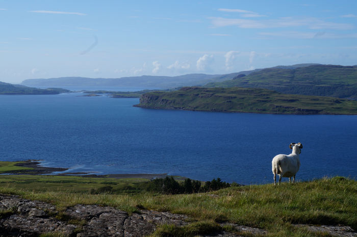 Isle of Mull 7