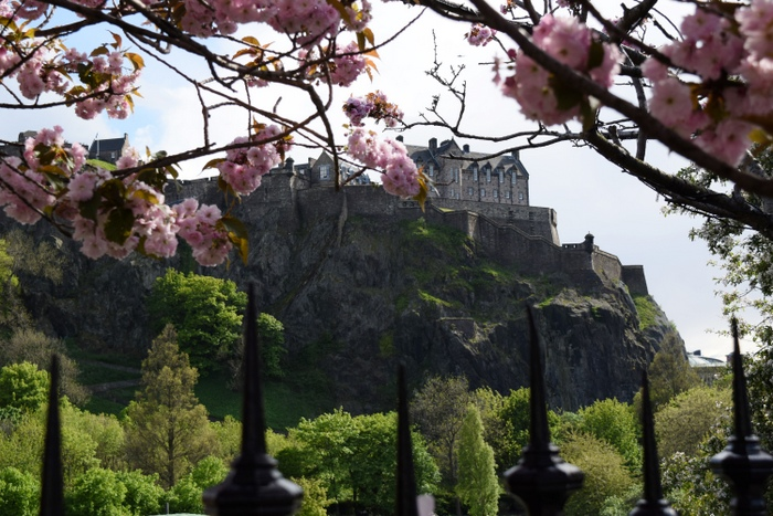 Edinburgh Cherry Blossoms 4