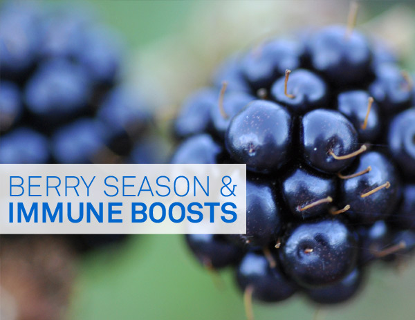 Berry Season and Immune Boosts by Sarah Gray, Medical Herbalist