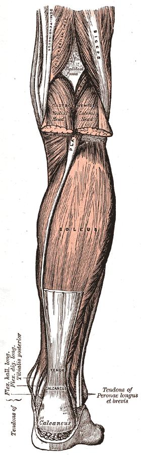 Henry Vandyke Carter, Public domain, via Wikimedia Commons