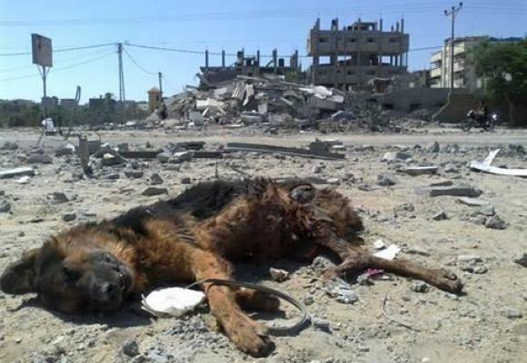 gaza guerra israele distruzione