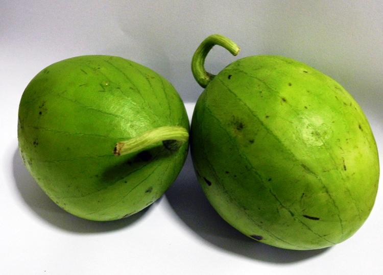 Frutti di zucca edera