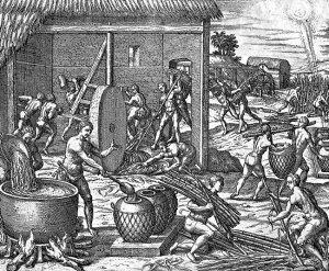 Raccolta e lavorazione della canna da zucchero affidata agli indigeni d'America