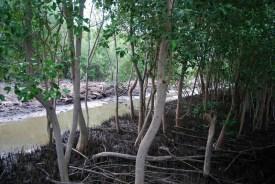 La vista da un bungalow al Bangpu Nature Education Centre