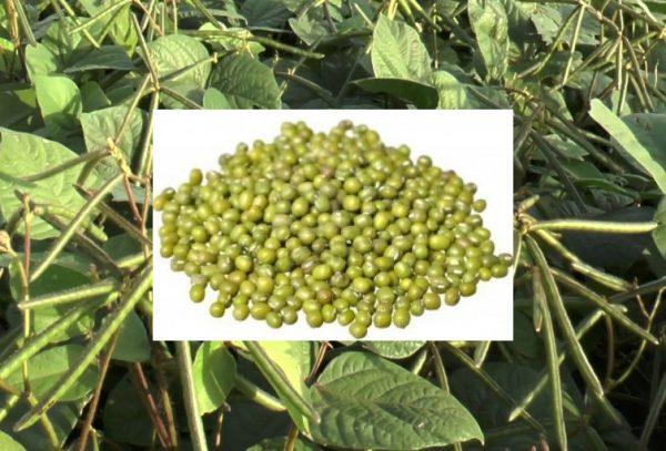 2020 Telugu Agricultural News - Pesara Pest Control
