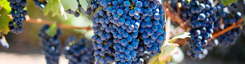 creavini_grapes