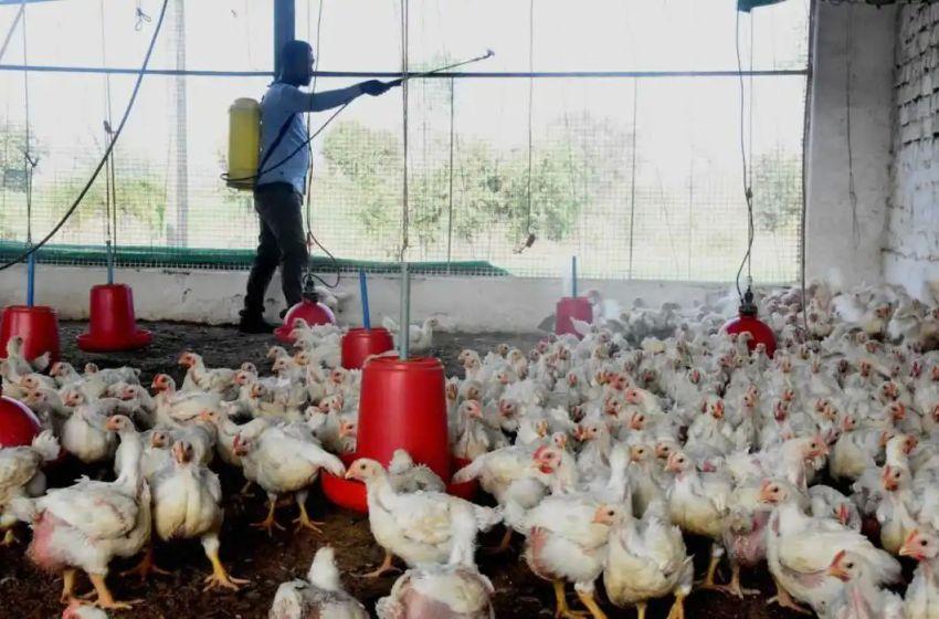 Bird flu: Centre asks states, UT's to increase surveillance
