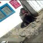 경비초소 앞에 앉아 있는 성인 꼬제비. 2012년 11월 양강도 혜산시 (아시아프레스)