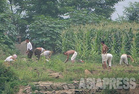 속옷 차림의 병사들이 김을 매고 있다. 자급, 자족을 명령 받은 부대가 많다. 2007년 8월 평안북도 삭주군을 중국 측에서 촬영 아시아프레스