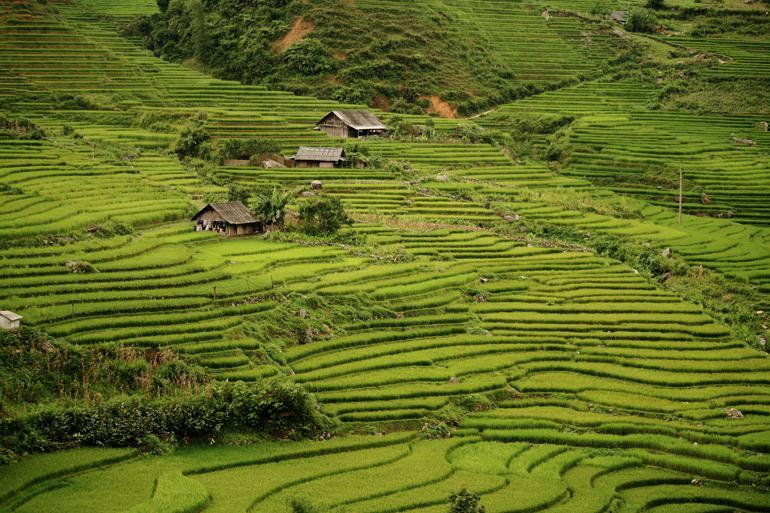 Explore the rice terraces of Sapa @Jorge Cancela