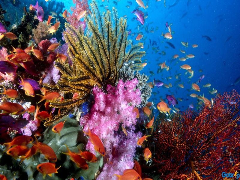 Vietnam –Paradise-for-divers2jpg