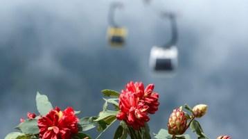 Flowering seasons of Northwest Vietnam – Another breath-taking scenery of Vietnamese highlands