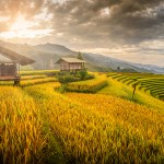 Discovery North – East Vietnam 13 Days / 12 Nights