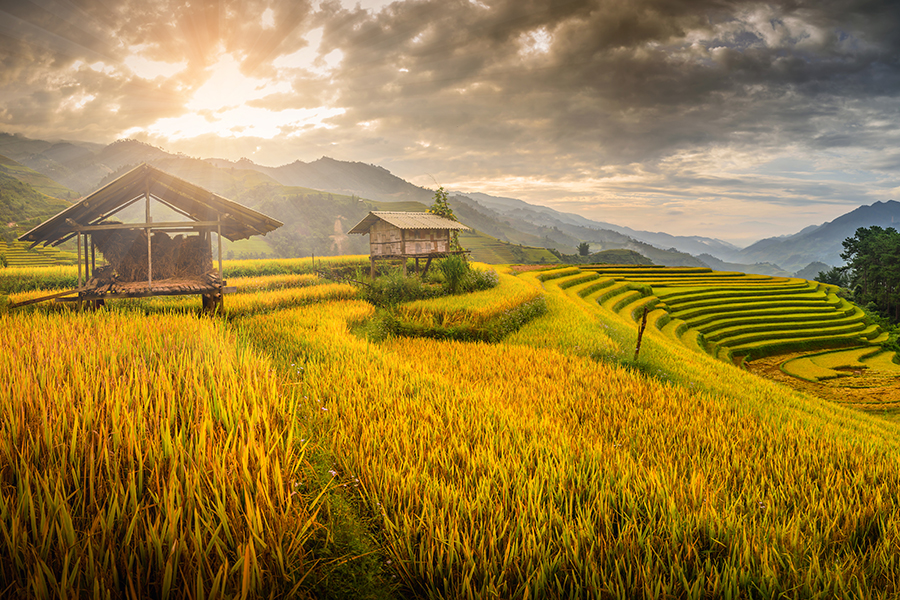 Vietnam Tour Packages From Usa, Vietnam Tours March November 2020