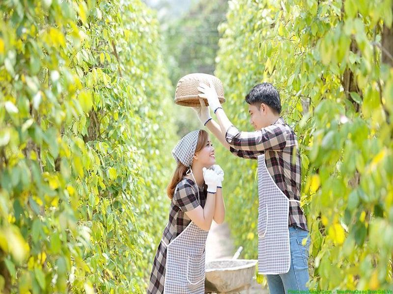 Phu Quoc pepper garden 1