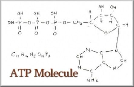 ATP Adenosine Tri-phosphate
